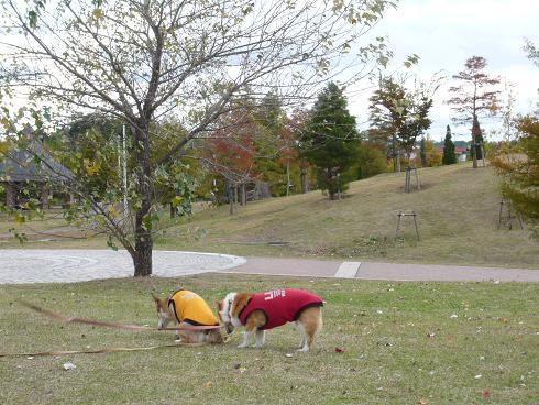 秋空の下で。