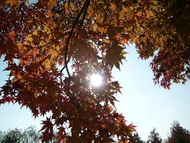 秋だわねぇ。