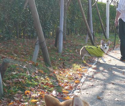 葉っぱ踏み踏み。