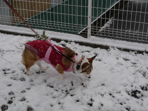 これが、雪?