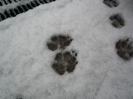 雪の紋章?